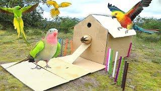 Simple DIY Bird House Trap Using Corrugated Boxes That Work 100% - How To Make a Simple Bird Trap