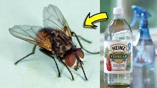 How to Get Rid Of House Flies Infestation Quickly In My House – Natural Ways That Actually Works