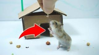 How to Make House for Rat - DIY Mini