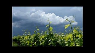 Outcry as Japanese winemaking couple ordered to leave France