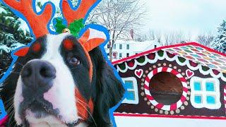 How to Make Huge Gingerbread Dog House for 2 Giant Dogs