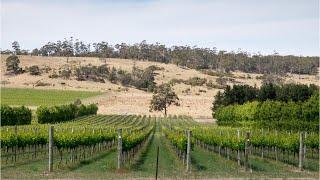 Australia's Drought May Reduce Wine Yields, But Increase Quality