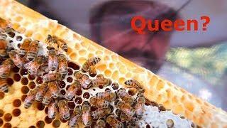 So Many Honey Bees!!!