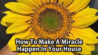 How To Make A Miracle Happen In Your House | Tip Of The Day | Dr. Robert Cassar