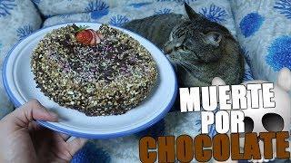 HAGO BIZCOCHO DE CHOCOLATE EN LA NUEVA COCINA