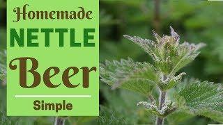 Homemade Nettle Beer Recipe