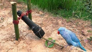 Best Bird Trap Make From Microphone / How to Create Bird Trap using Microphone
