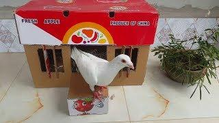 How To Make Simple Pigeon House With Apple Box