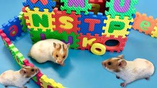 How to make ABC house for Hamster! Learning Alphabet Letters & Numbers with Eva Puzzle Mats