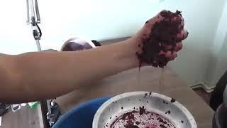 Evde şarap nasıl yapılır   How to make homemade wine / +18