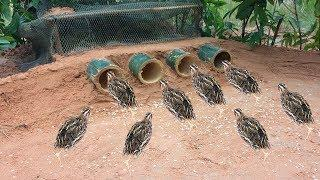 Learning to make Bamboo Palm Wine bird trap DIY & Net That Work 100%