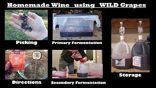 Homemade Wine From Wild Grapes
