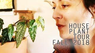 House Plant Tour Fall 2018 | Over 60 Plants!