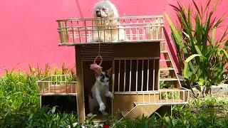 How To Make MeyMey Dog And Cat House From Cardboard