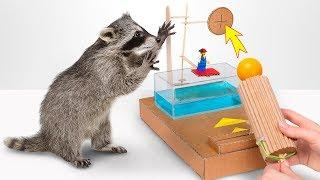 Try To Make A Dunk Tank Game When There Is A Raccoon In Your House!
