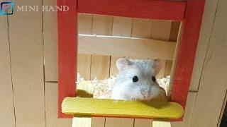 How to Make Popsicle Stick House for Hamster#2