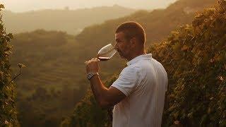 The Art of Making Wine - A film by Matteo Bertoli  (TRAILER)