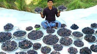 50 KG GRAPE JUICE | Summer Health Drinks Recipe | Grape Juice from Farm Fresh | Village Food Channel