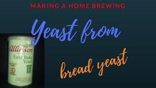 making a yeast strain from bread yeast