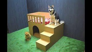 How to Make  Puppy Dog House from Cardboard