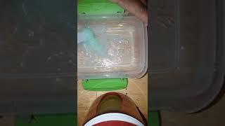 How to make slime with Suave Kids 3 in 1 in a special ingredient (hit or miss)