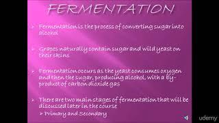 Making Homemade Wine: A Step-by-Step Guide! : Fermentation