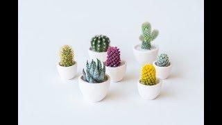 Micro Cacti Review | HB Obsessed | House Beautiful
