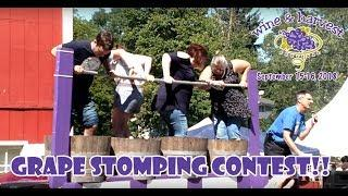Grape Stomping Contest at the Cedarburg Harvest & Wine Fest in Cedarburg, Wi
