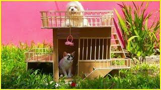How To Make Amazing Puppy Dog And Cat House From Cardboard
