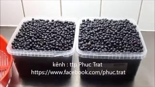 Blueberries make wine on the wine   vô rừng hái trái việt quất về làm rượu vang