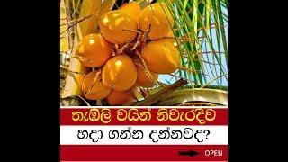 තැඹිලි වයින්, how to make a king coconut wine at home (sinhala)