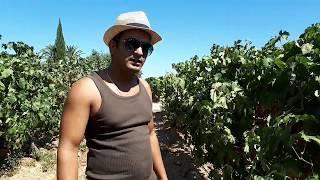 Wine making process?