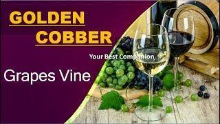 make wine at home very easy malayalam video | മുന്തിരിങ്ങ വൈന്