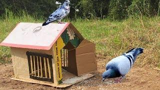 How to Make Bird Trap House Technology Using Box Paper - Easy Bird Trap