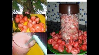 ചാമ്പങ്ങ വീട്ടിൽ നട്ട് വളർത്താം || ചാമ്പങ്ങ വൈനും ഉണ്ടാക്കാം Rose Apple|| Chambakka Wine Recipe