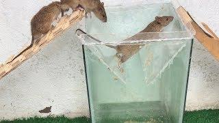 Rat Trap Water ???? 3 Mice in trapped 1 Hour ???? Mouse/ Rat trap ???? How to Make Rat Trap | House