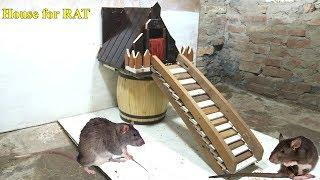 Creative Animal House - House for Rat - How to Make a Wood House for Rat - Rat In House