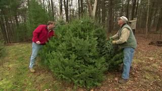 How To Pick The Perfect Christmas Tree with Roger Cook