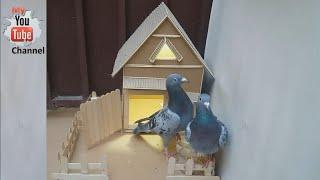 how to make a house of cartoon for pigeon -Simple house  in 10 minutes