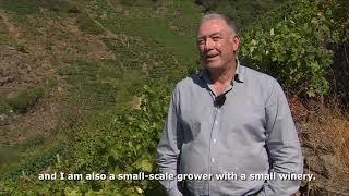 Ribeira Sacra: discovering a Spanish wine jewel
