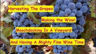 RV LIFE - Harvesting Grapes/Making Wine-The Vineyards
