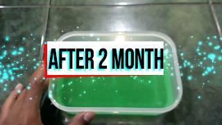 Sunlight Slime Tutorial I Sunlight Slime After 2 Month I Bagaimana Sunlight Slime setelah 2 bulan