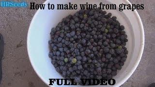 ⟹ How to make grape wine and vinegar | Full Video