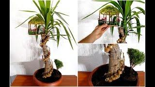 How to make a Fairy House on Yucca plant / Yucca plant decoration
