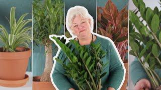 5 Easy House Plants That Aren't Succulents