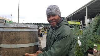 OAK WINE BARRELS AND WHY THEY MAKE FOR GROWING A EDIBLE FOOD FOREST