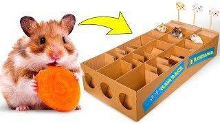 New Hamster Race From Cardboard For Three Cute Hamsters ????????