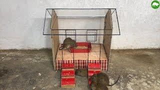 House for Rat - How to Make a Wood House for Rat - After I trapped a lot of mice
