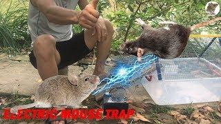 Electric Mouse Trap/How to make Electric Mousetrap Work With  Battery 12v/Electric Rat Trap House