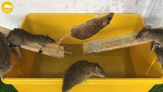 DIY Mouse Trap Water ???? 10 Mice in trapped 2 Hour ???? Mouse/ Rat trap ???? How to Make Rat Trap ?
